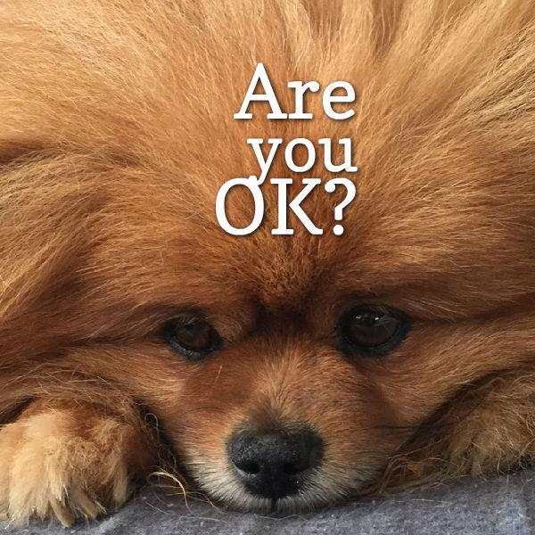 are you ok - photo #42